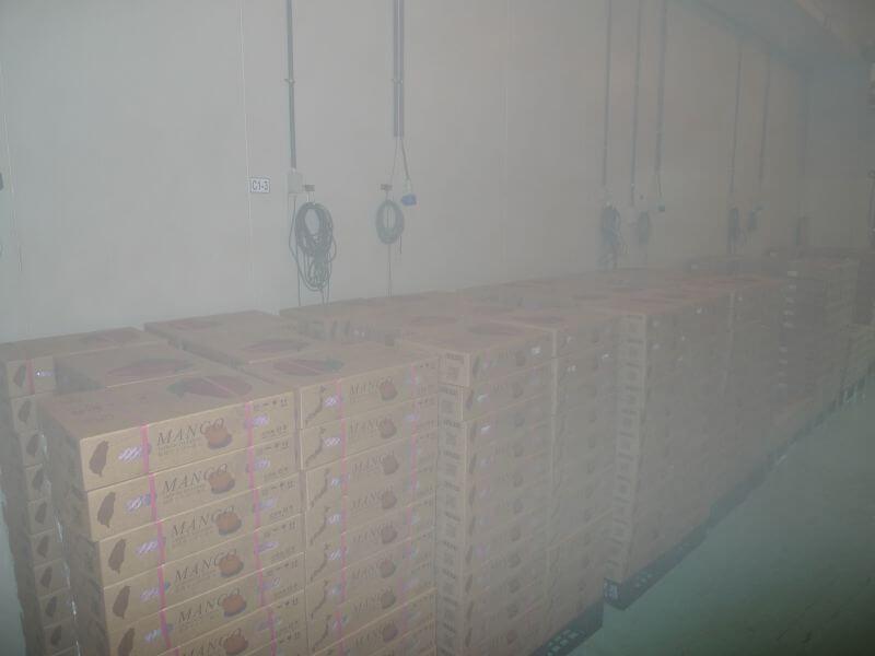 眼鏡伯輸日芒果禮盒於冷倉保存,防止失溫確保品質